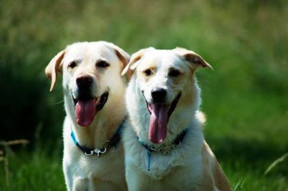 Vet-dogs.de, vetdogs.de, Rocky und Hugo