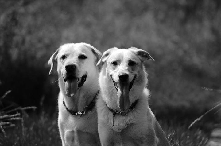Rocky und Hugo, vetdogs.de,vet-dogs.de