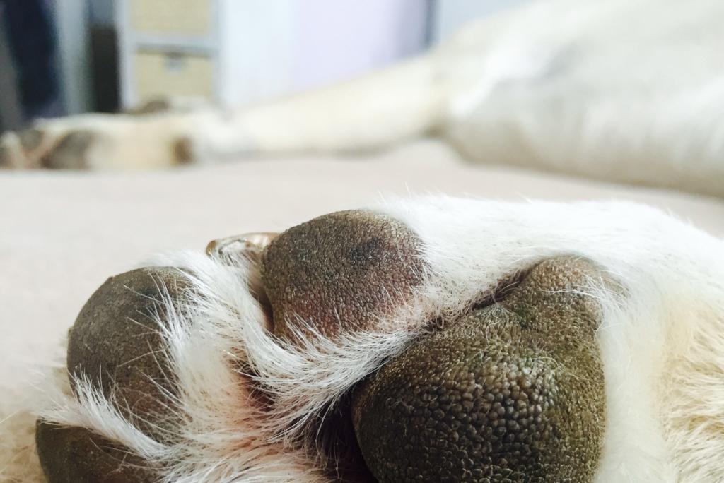 Arthrose beim Hund, www.vetdogs.de, www.vet-dogs.de, online Tierarzt