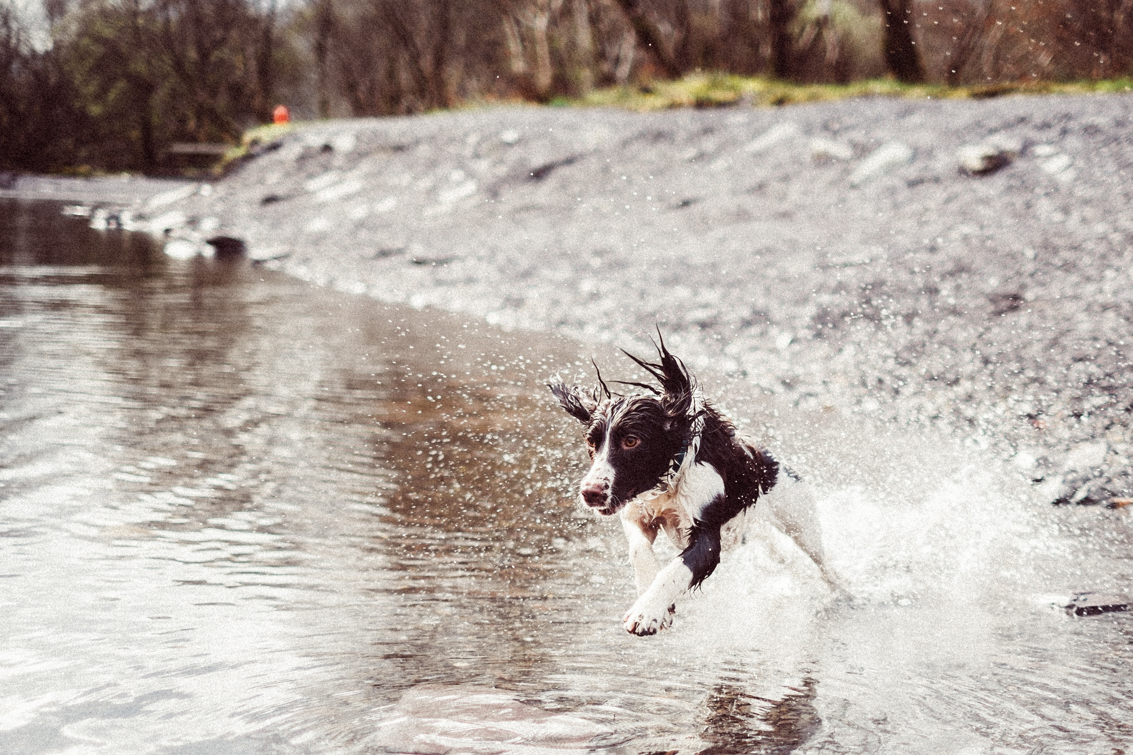 Zeckenprophylaxe, www.vetdogs.de, www.vet-dogs.de, online Tierarzt
