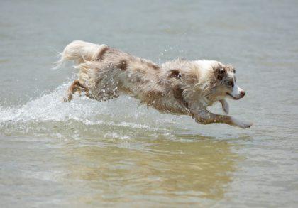 Wasserrute beim Hund, Symptome und Behandlung