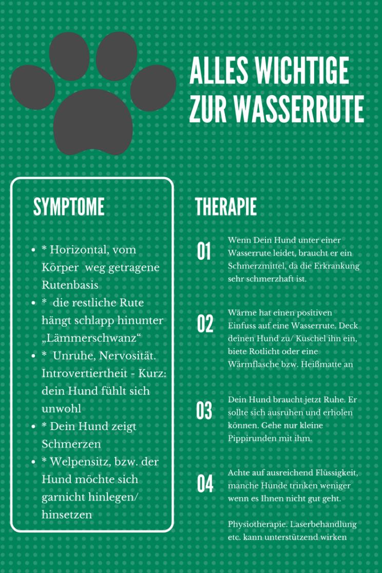 Symptome und Therapie bei Wasserrute, Hund