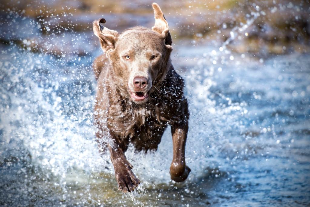 Wasserrute beim Hund, www.vetdogs.de, www.vet-dogs.de, online Tierarzt