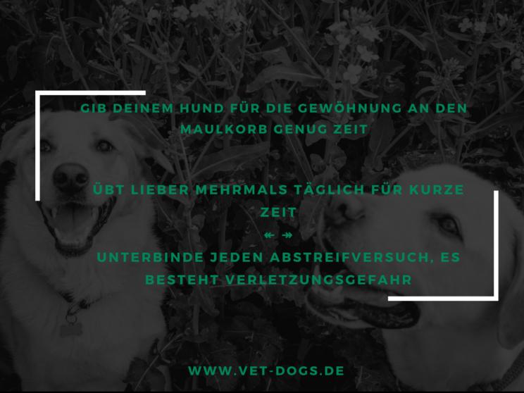 www.vet-dogs.de, vetdogs, Maulkorb, Maulkorbtraining, passenden Maulkorb finden