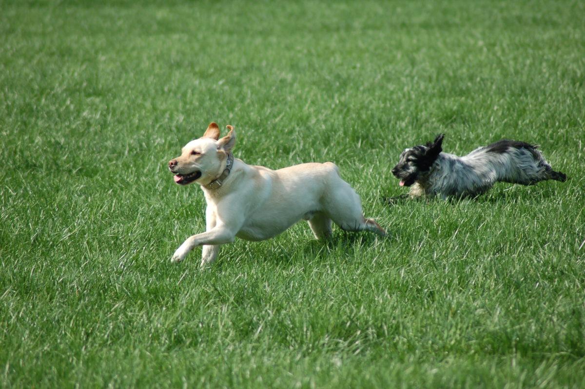 Arthrose, Therapie, vetdogs, vetdogs-dogs