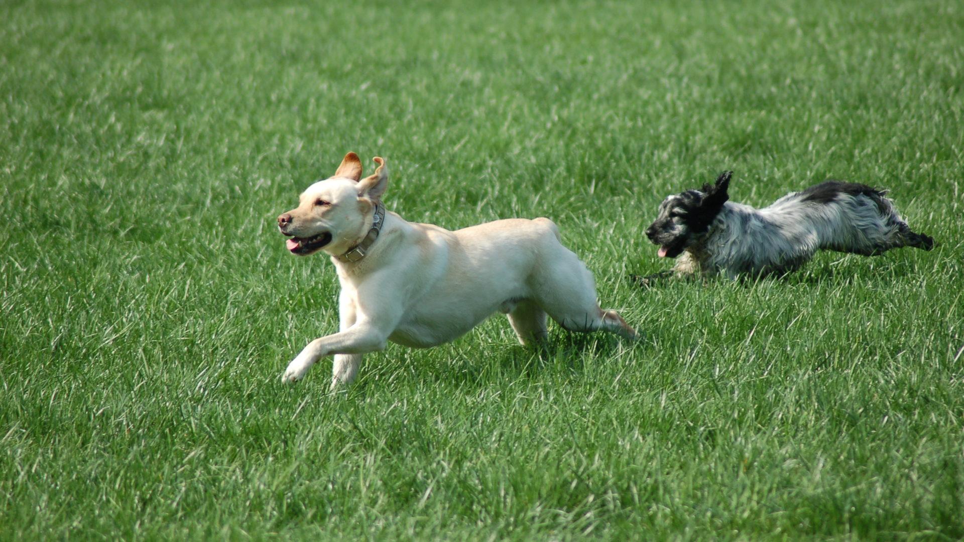 Vet-Dogs