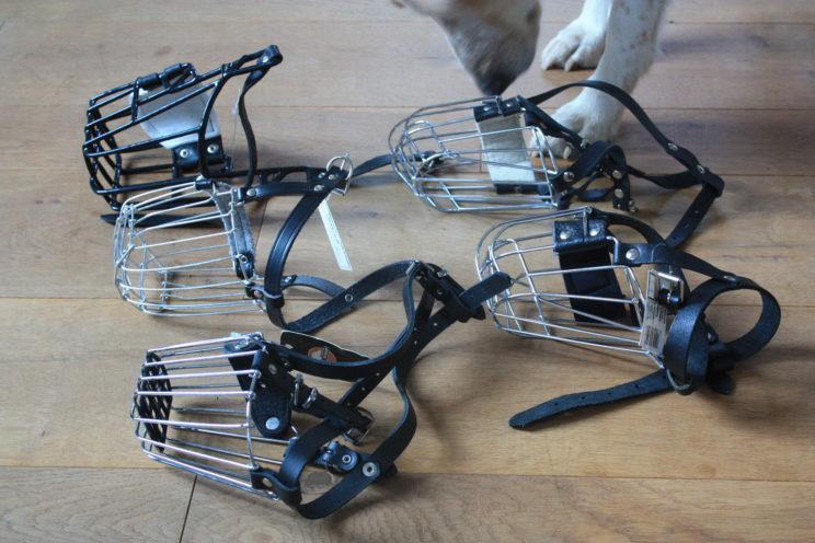 Maulkorb, Hund, Training, Vet-dogs
