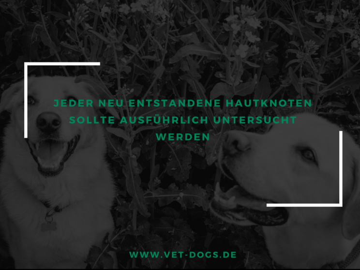 Vet-dogs.de, vetdogs, Hauttumore beim Hund