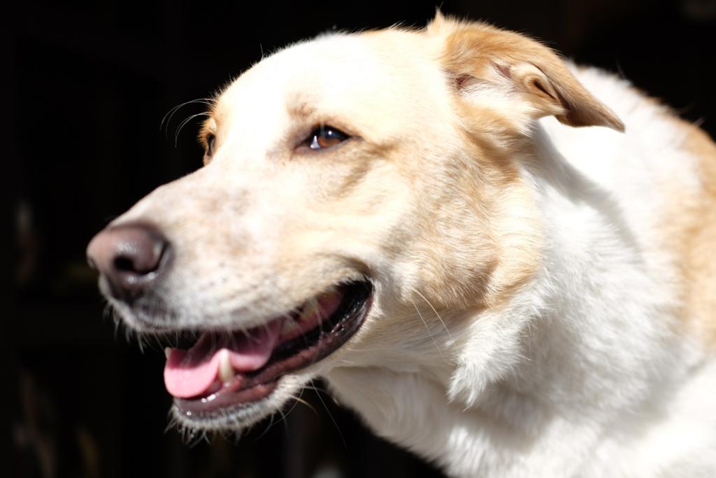www.vet-dogs.de, online Tierarzt, www.vetdogs.de, Mastzelltumor beim Hund