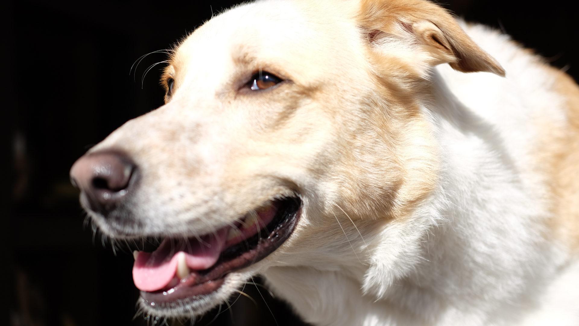 Vetdogs, vetdogs-dogs, Hauttumore, Tumor, Behandlung, Diagnostiki