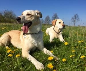 Leinenagrression ade, www.vetdogs.de, www.vet-dogs.de