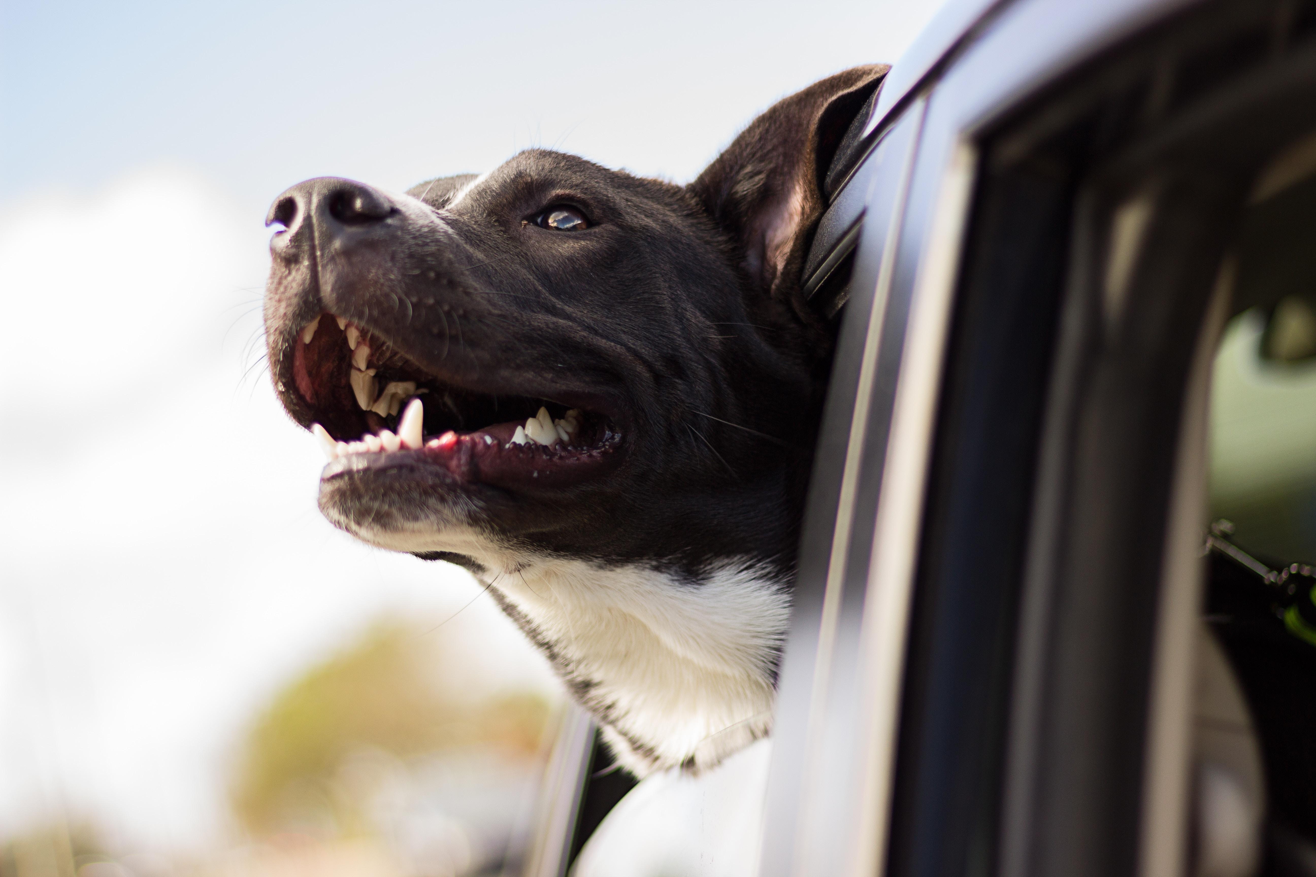 Hitzschlag beim Hund - die wichtigsten Fakten, www.vet-dogs.de, www.vetdogs.de, online Tierarzt