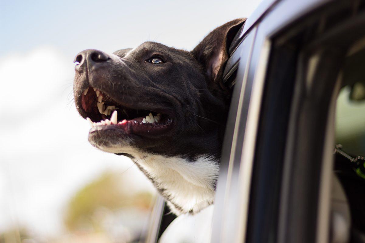 Hitzschlag beim Hund - die wichtigsten Fakten