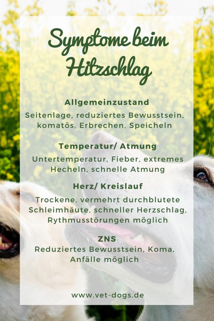 Hitzschlag beim Hund -die wichtigsten Fakten