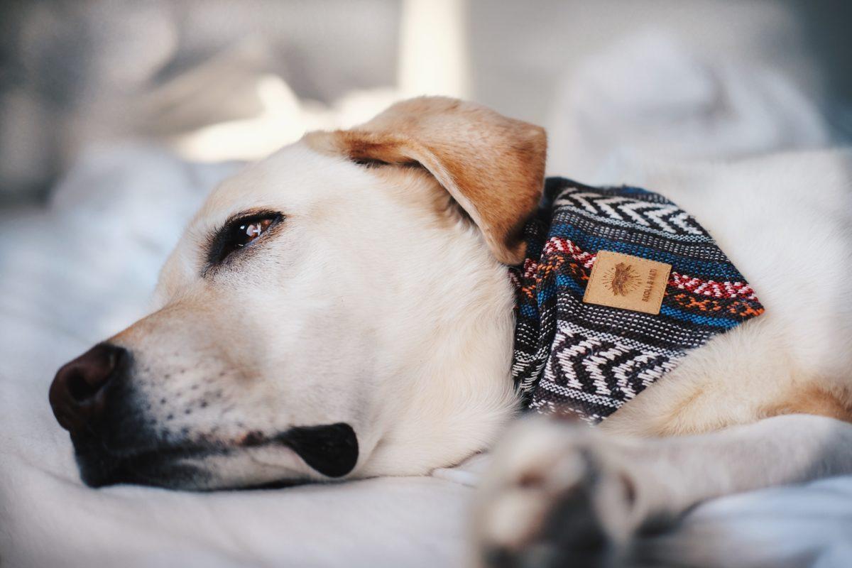 Der Mastzelltumor beim Hund - So hilfst du deinem Hund, www.vet-dogs.de