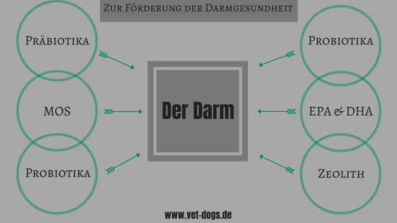 DIe Verdauung des Hundes, www.vet-dogs.de