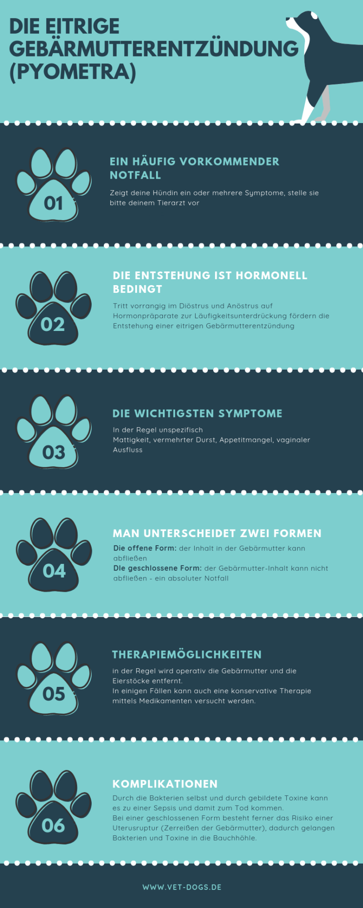 Die eitrige Gebärmutterentzündung (pyometra) der Hündin, www.vet-dogs.de