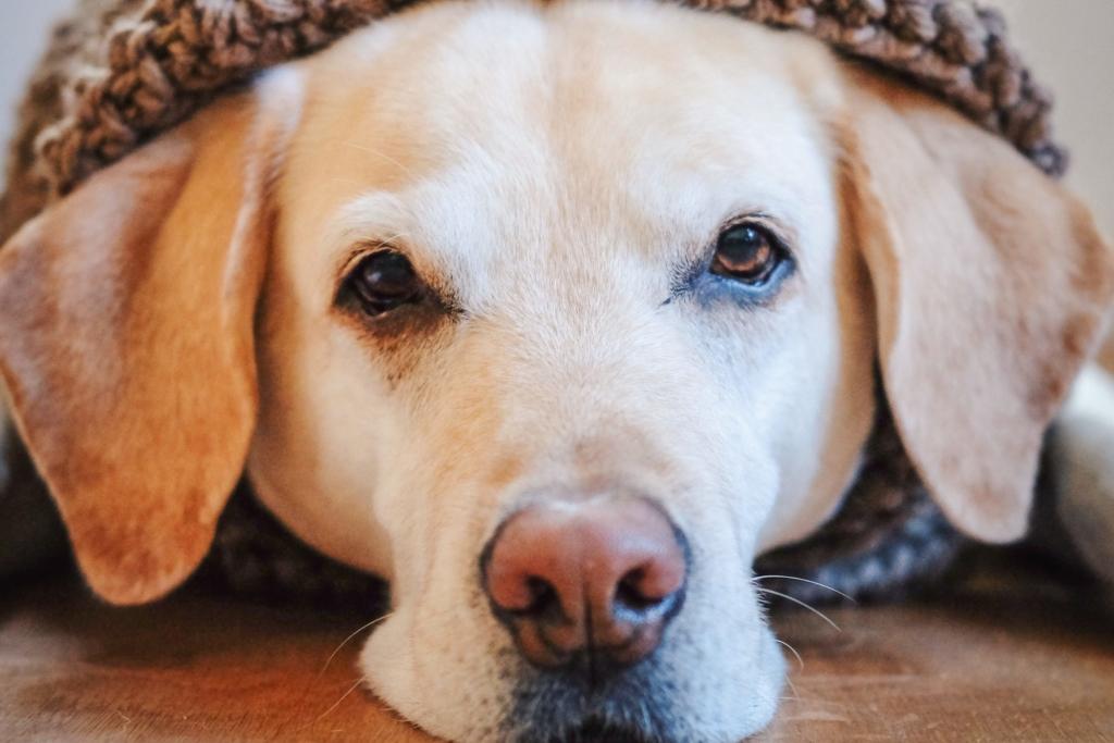 Das Blutbild beim Hund, www.vet-dogs.de, www.vetdogs.de