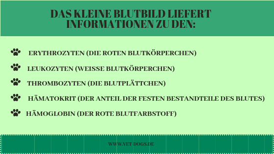 das Blutbild deines Hundes, www.vet-dogs.de
