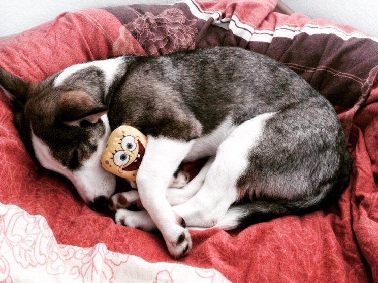 Bindung vs. Verbindung zu deinem Hund, www.vet-dogs.de