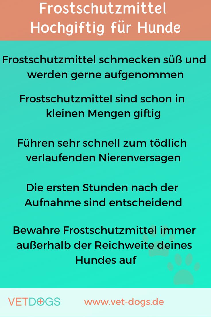 Frostschutzmittel -hochgiftig für Hunde, www.vet-dogs.de, www.vetdogs.de