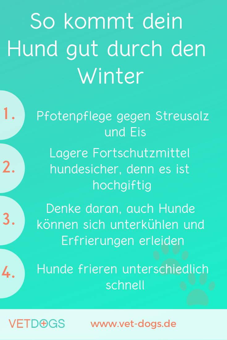 So kommt dein Hund gut durch den Winter, www.vet-dogs.de, www.vetdogs.de
