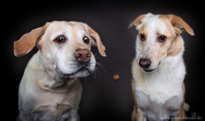 Fotoshooting in Lohmar, Traumblende, www.vet-dogs.de,www.vetdogs.de