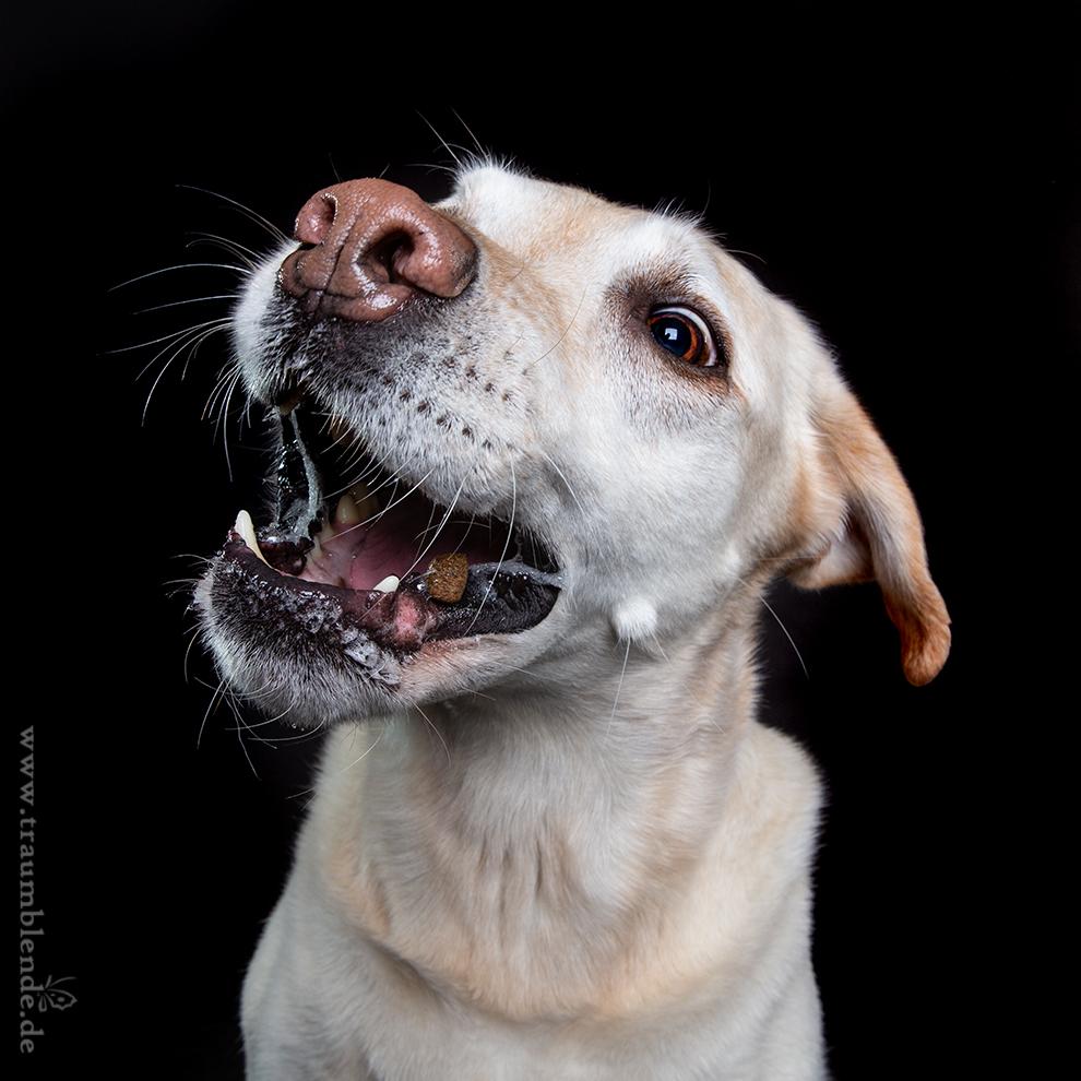 Fotoshooting in Lohmar, Traumblende, www.vet-dogs.de