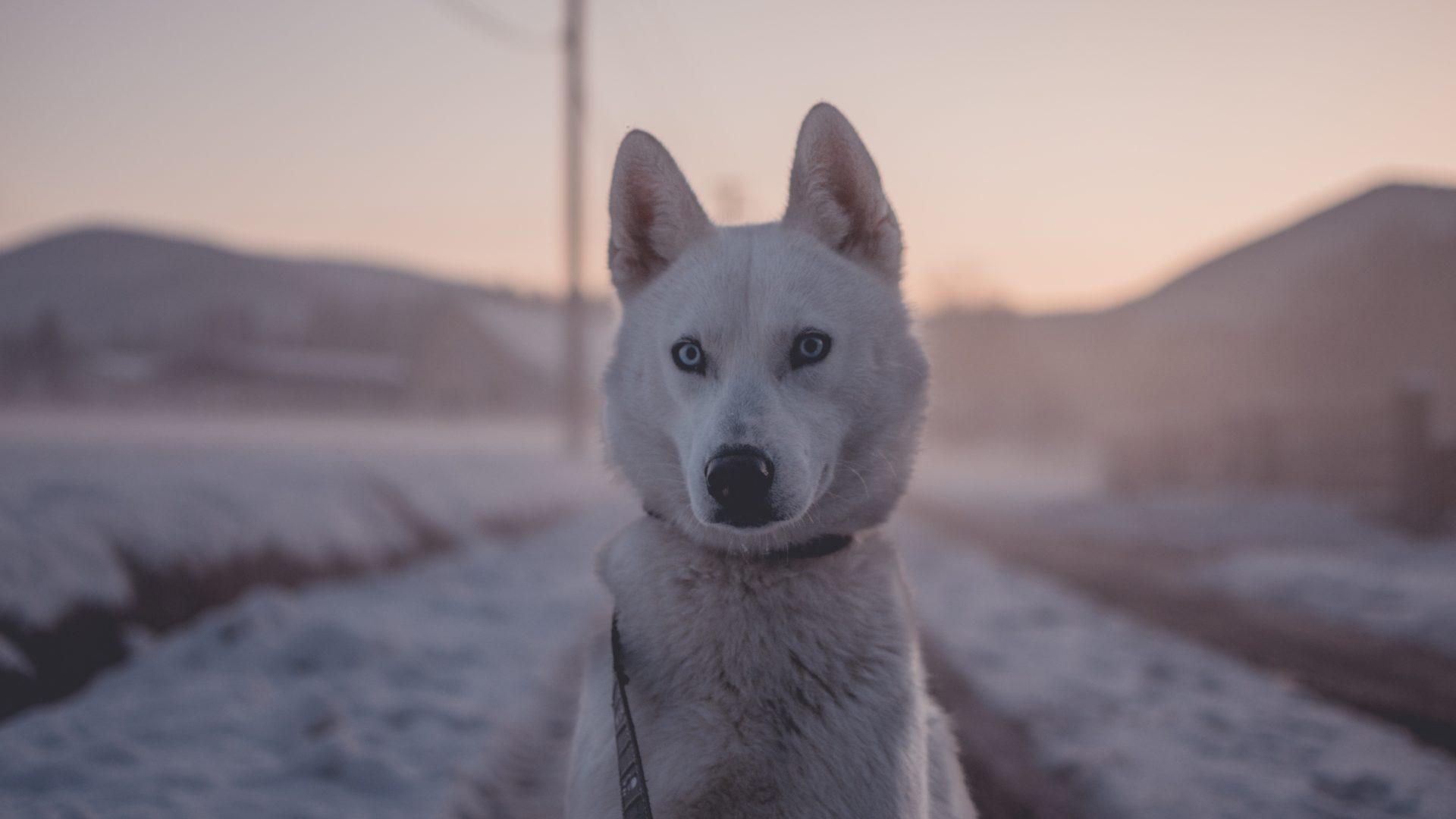 So kommst dein Hund gut durch den Winter, www.vet-dogs.de, www.vetdogs.de