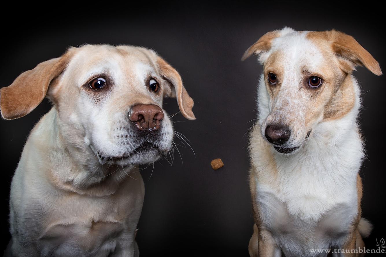 www.vet-dogs.de, www.vetdogs.de, dein online Tierarzt