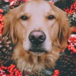 Silvesterangst bei Hunden – So kommt ihr entspannt ins neue Jahr