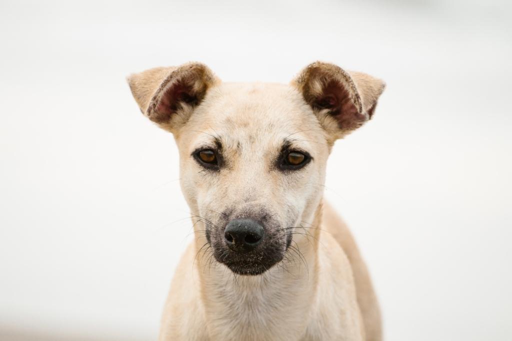 Öle in der Hundeernährung, www.vetdogs.de, www.vet-dogs.de
