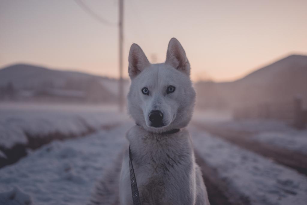 Frostschutzmittel sind giftig für Hunde, www.vet-dogs.de, www.vetdogs.de