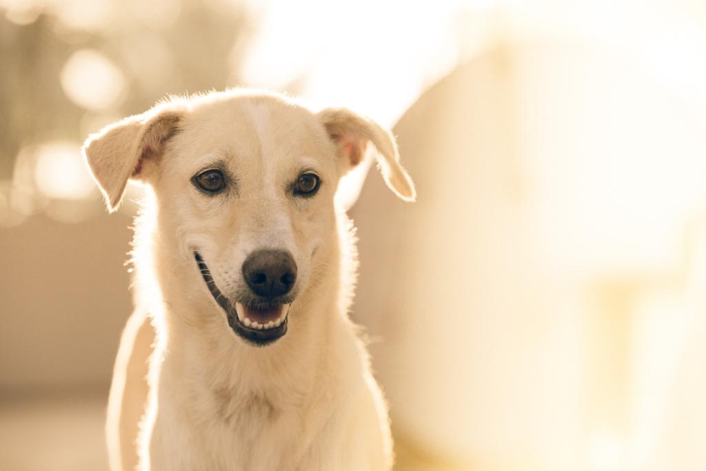 Warum ein Allergietest oftmals keinen Sinn macht, www.vetdogs.de, www.vet-dogs.de