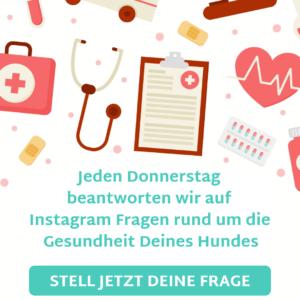 Vet-Dogs, dein online Tierarzt, www.vet-dogs.de, www.vetdogs.de