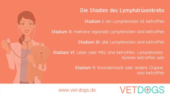 Lymphdrüsenkrebs (Lymphom) beim Hund, www.vet-dogs.de, www.vetdogs.de