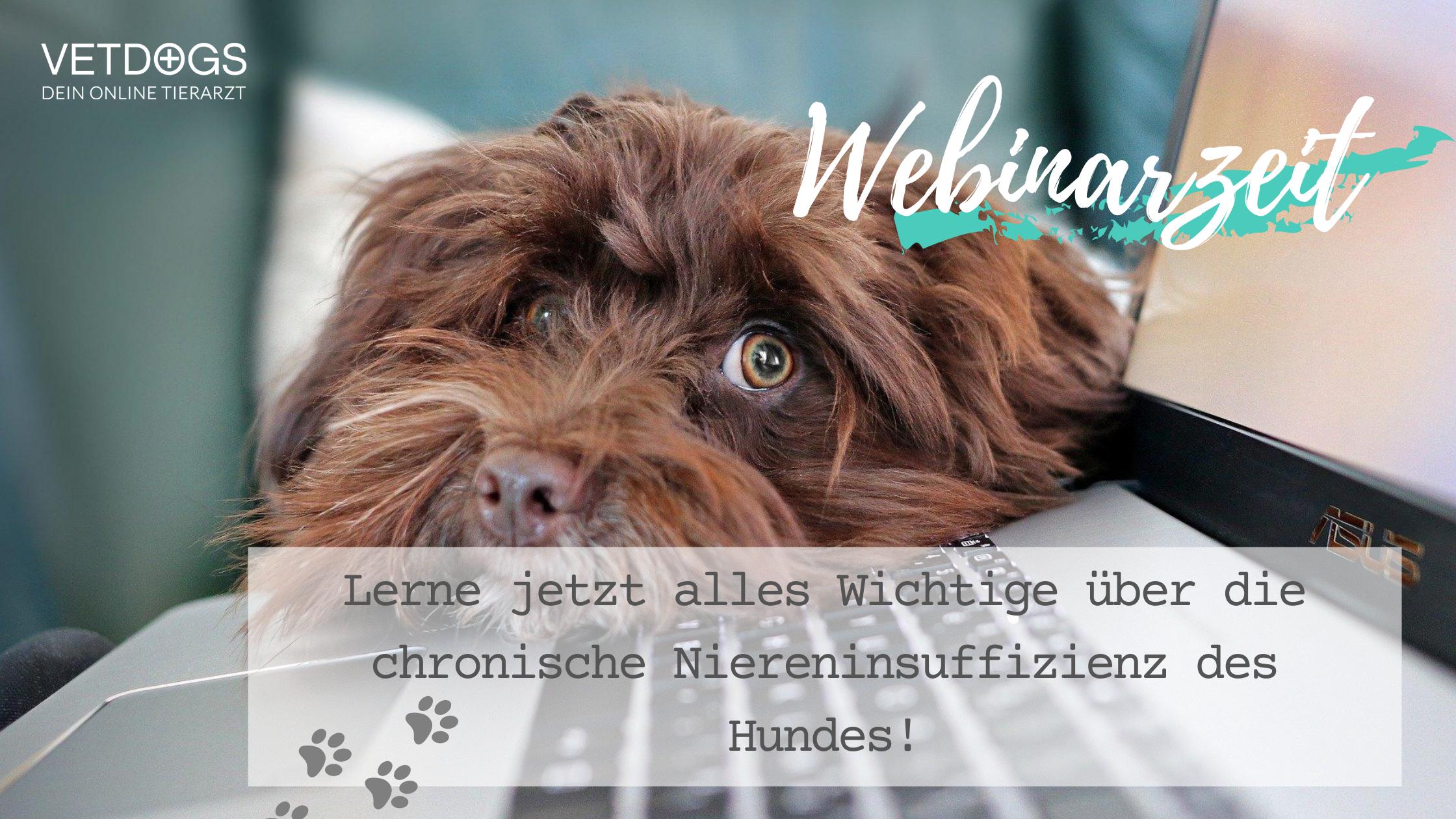 Webinar-Nierendiät-Niereninsufizienz-Hund