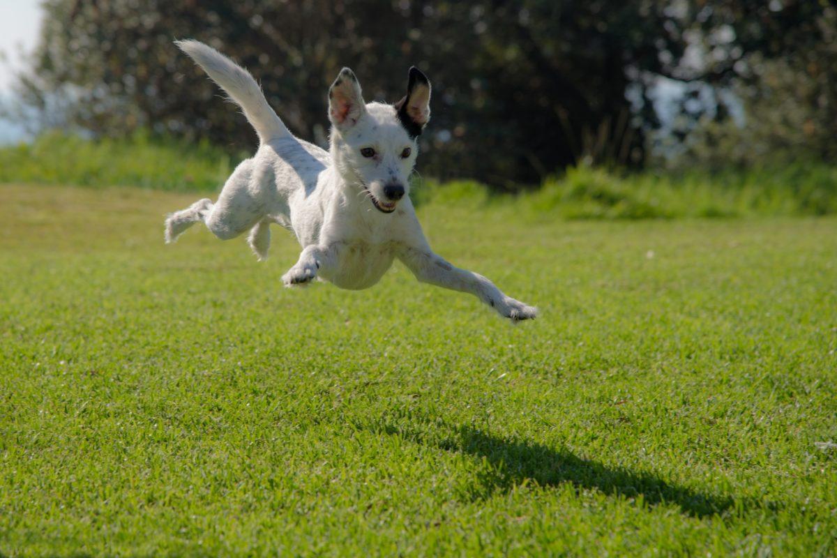 Die Frühjahrskur für deinen Hund, Kräuter, www.vet-dogs.de, www.vetdogs.de, dein online Tierarzt