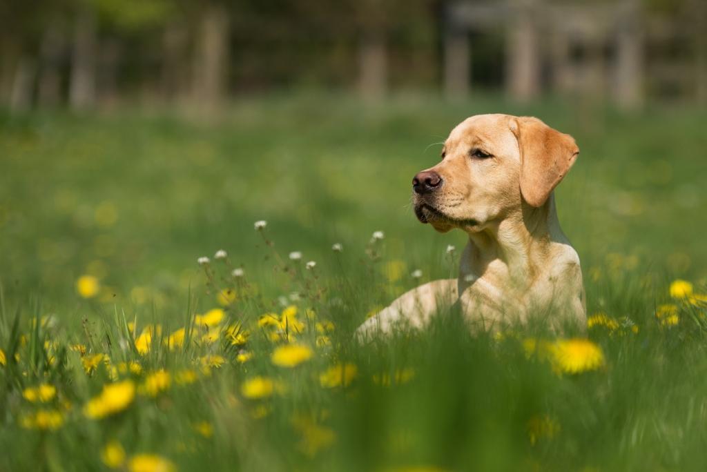 die Frühjahrskur für deinen Hund, Kräuter, www.vet-dogs.de, www.vetodgs.de, dein online tierarzt