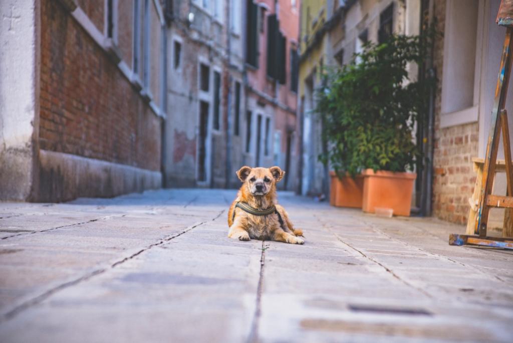 Demenz beim Hund_Vet-Dogs_dein online Tierarzt