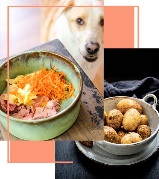 Barf, Ernährungsberatung, online Tierarzt, Vet-Dogs