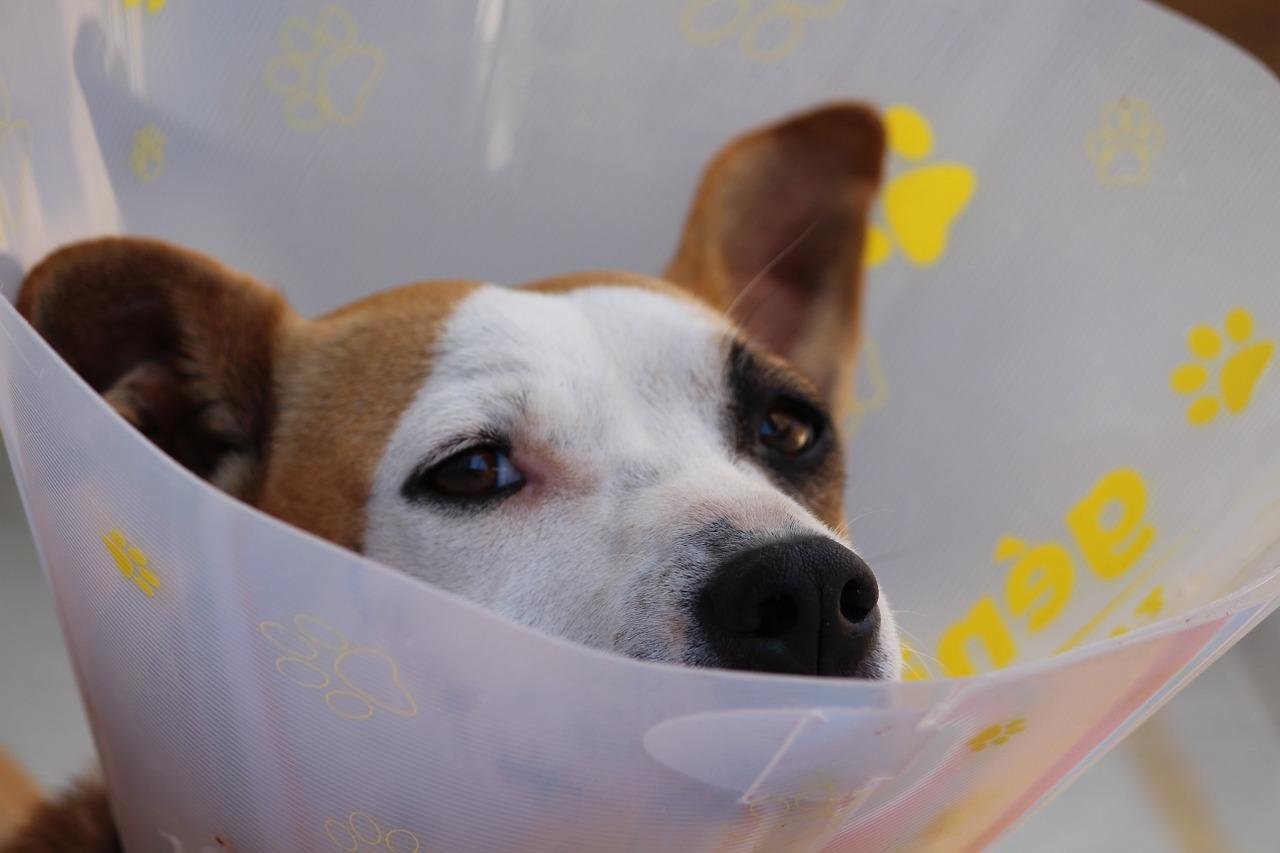 Dein-hund-braucht-eine-halskrause?