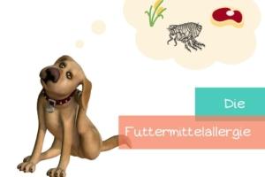 Futtermittelallergie-beim-hund