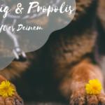 Gastbeitrag: Honig und Propolis für Hunde