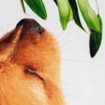 Hundefutter und das böse Getreide: Ich räume mit den Vorurteilen auf