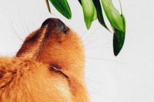 getreide-wirklich-so-schlecht-im-hundefutter
