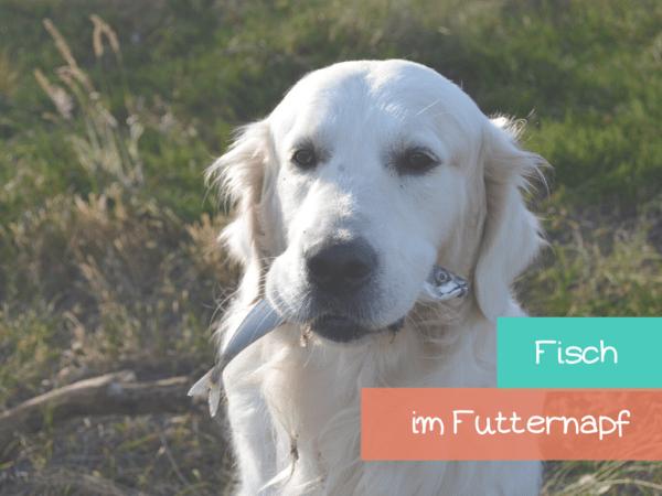Dürfen hunde fisch fressen