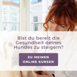 Online-Kurse-Hundegesundheit-Tierarzt