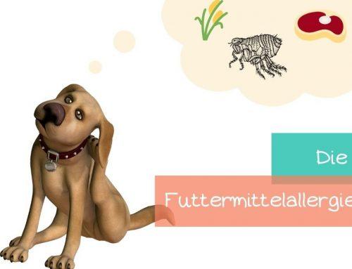 Was ist eine Futtermittelallergie beim Hund?