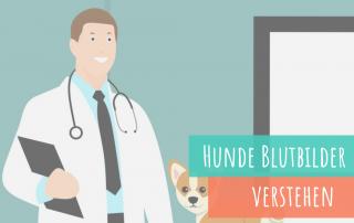 Blutbild-beim-Hund-als-Besitzer-verstehen